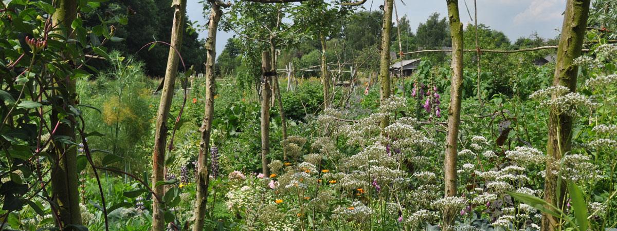 Permacultuurtuin